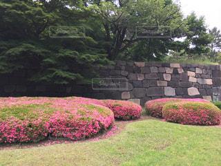 皇居東御苑二の丸庭園の写真・画像素材[518479]