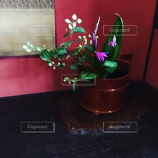 花飾りの写真・画像素材[543744]