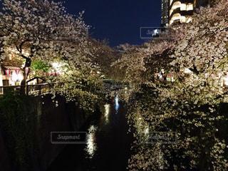 No.504686 桜