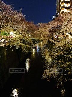 No.504688 桜