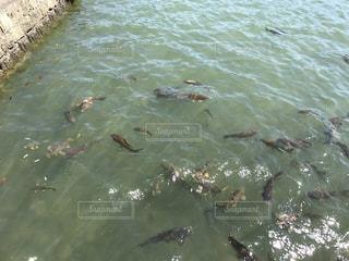 池の写真・画像素材[502759]