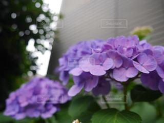 植物の写真・画像素材[566983]