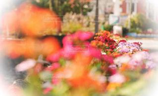 街中花壇の写真・画像素材[898663]