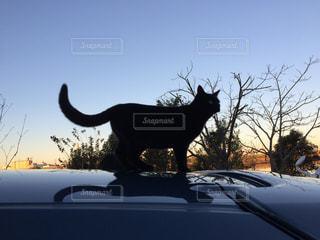 猫の写真・画像素材[505096]