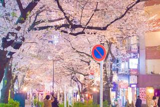桜と標識の写真・画像素材[1105414]