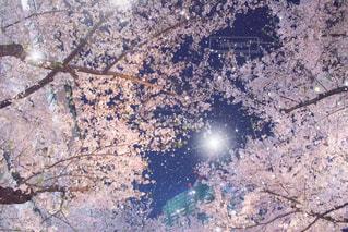 背景の山と木の写真・画像素材[1105419]