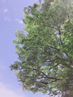 近くの木のアップの写真・画像素材[1136244]