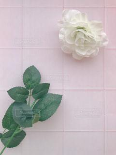 ピンクの花のグループの写真・画像素材[1173654]