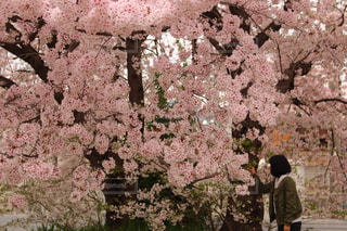 春 - No.503934