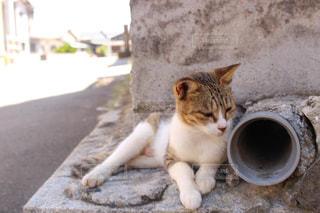 猫 - No.697481