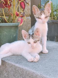 猫の写真・画像素材[697484]