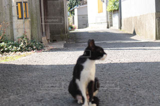 猫 - No.697490