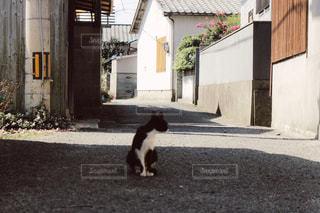 建物前の歩道の上を歩く猫の写真・画像素材[787414]