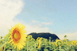 黄色の花の写真・画像素材[787424]