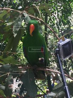 オーストラリアの写真・画像素材[503961]