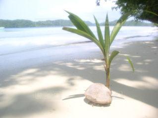 海の写真・画像素材[533285]