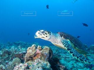 海の写真・画像素材[533326]