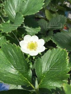 花の写真・画像素材[17134]