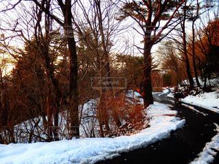 森林の写真・画像素材[504270]