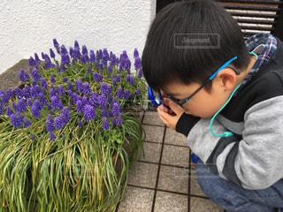 花の観察 - No.1088343