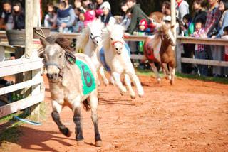 家族で楽しむ競馬🏇の写真・画像素材[2236653]