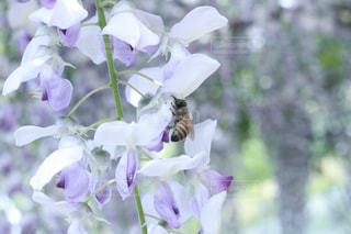 紫色の花でいっぱいの花瓶の写真・画像素材[2223941]