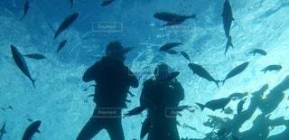 海の写真・画像素材[25658]