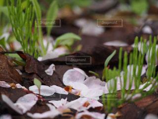 花の写真・画像素材[512923]