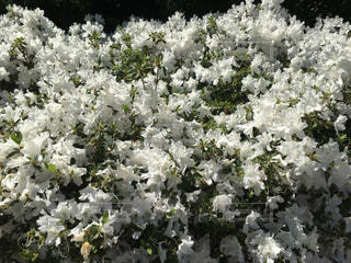 近くの花のアップの写真・画像素材[1227251]