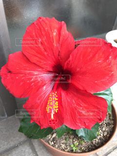 花の写真・画像素材[511627]