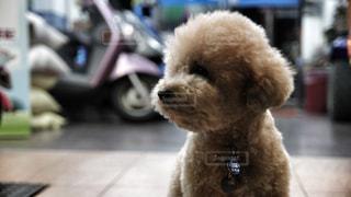 犬 - No.509982