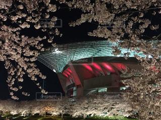 桜の写真・画像素材[506566]
