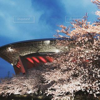 春の写真・画像素材[506571]