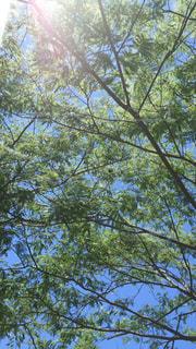 No.510021 風景
