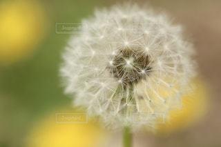花の写真・画像素材[511391]