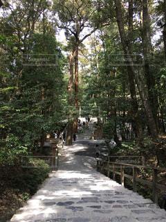 森林の写真・画像素材[560894]