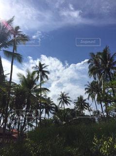 空の写真・画像素材[506959]