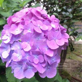 花の写真・画像素材[572493]