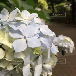 かわいいの写真・画像素材[572494]