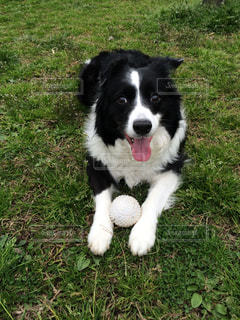 No.507756 犬