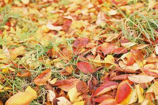 フィルムで撮った紅葉 - No.885012