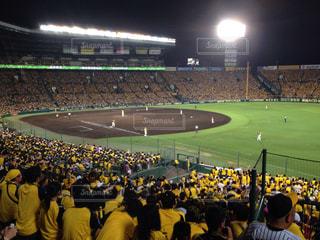 野球の写真・画像素材[507342]