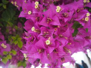 自然の写真・画像素材[507496]