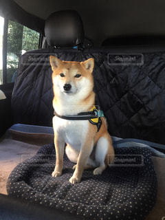 犬の写真・画像素材[512410]