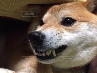 犬の写真・画像素材[512452]