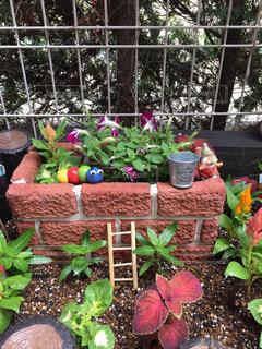 ガーデニング 庭 植物の写真・画像素材[572425]