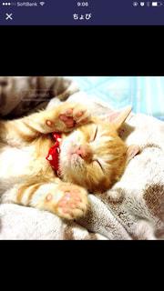 猫 赤ちゃんの写真・画像素材[572429]
