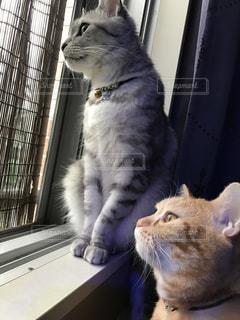 猫の写真・画像素材[572430]