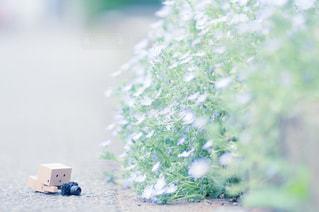 花 - No.520230