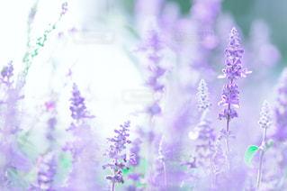 花の写真・画像素材[567279]